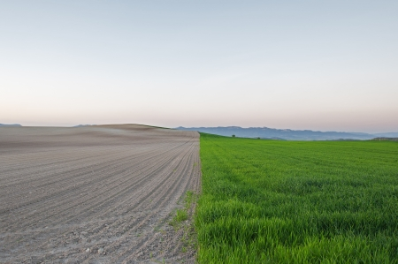 furrow: Plowed and planted fields at sunset