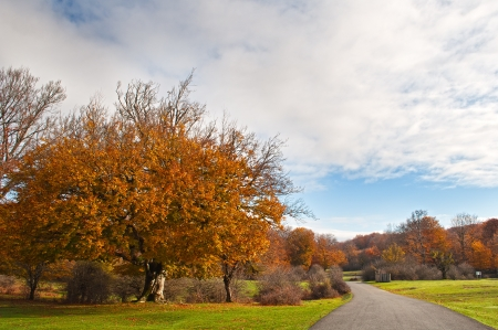 Beautiful autumn trees in Urbasa mountains, Navarra, Spain Stock Photo