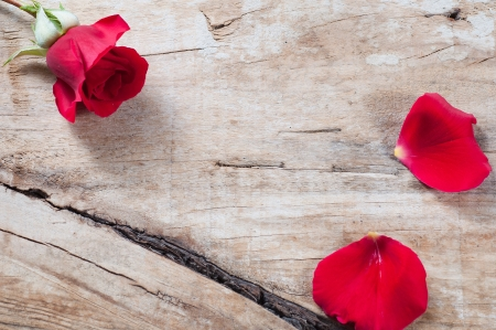 Red rose and petals on a wooden background photo