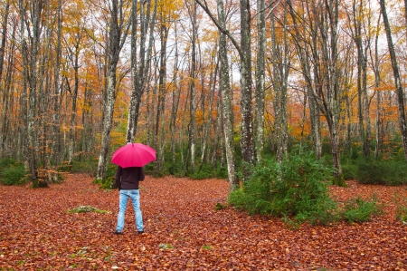 Man with an umbrella in a beech trees  forest. Rainy autumn day