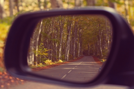 Car rearview. Beautiful autumn trees scene