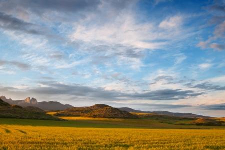 Gelbe Getreidefelder bei Sonnenuntergang. Sch�nes Licht und Himmel