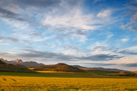 Yellow cereal fields at sunset. Beautiful light and sky Stock Photo