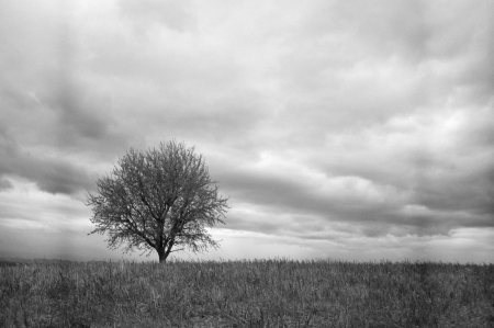 Lonely tree in the field, black and white Stock Photo