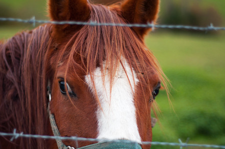 Brown and white horse portrait photo