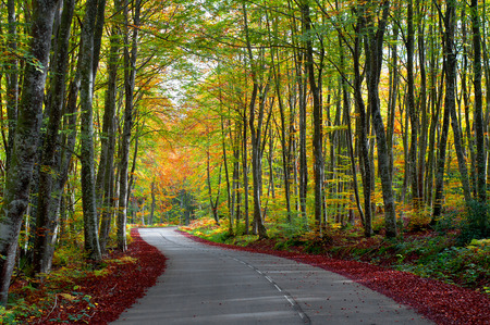 road in the forest in autumn, fall colors photo