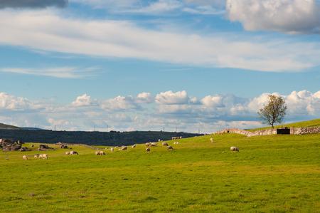 green meadows: Green meadows. Rural landscape Stock Photo