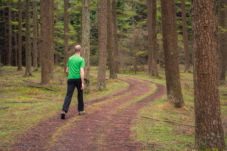 Young man walking in a path in a pine forest in autumn