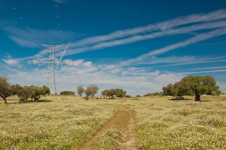 Pastures in Extremadura, Spain. Many oak trees and blue sky