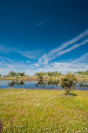 Pastures and pond in Extremadura, Spain. Many oak trees and blue sky
