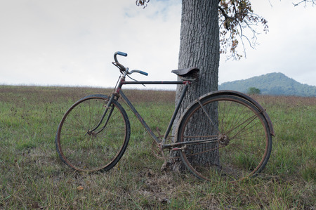 oxidized: Antique or retro oxidized bicycle outside on tree