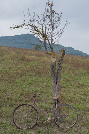 Antique or retro bicycle outside near a tree