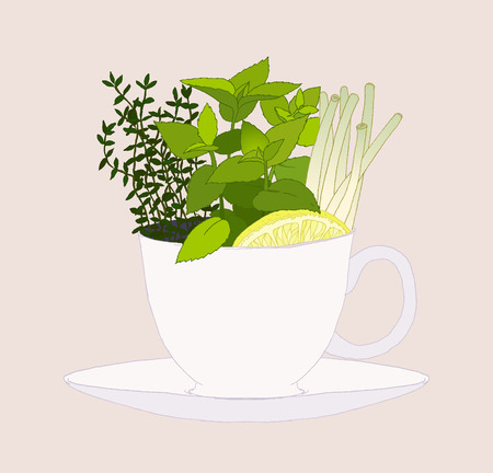 Set of fresh herbs in a tea cup. Vector illustration