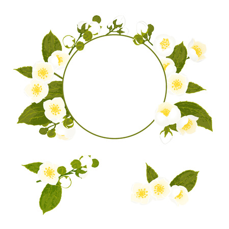 jasmin: White flowers collection with wreath, foliage and branch. Botanical style vector illustration. Illustration