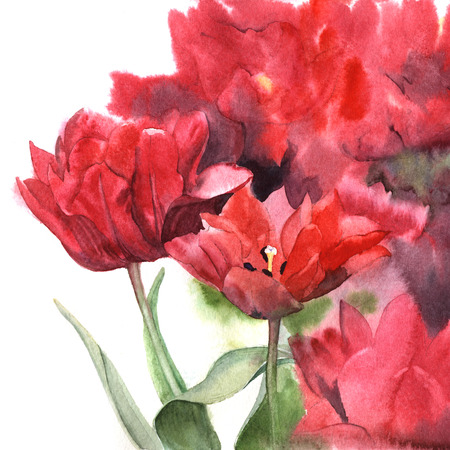 Watercolor red tulips. Floral hand-painted illustration for greeting cards.