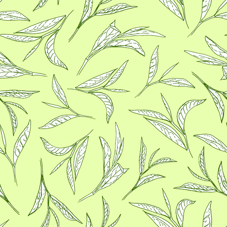 Tea tree leaves on light green background. Botanical style vector seamless pattern.