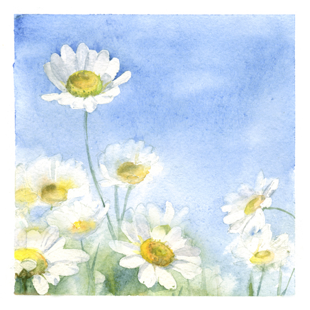 Watercolor poster with chamomile meadow. Floral hand-painted greeting card.