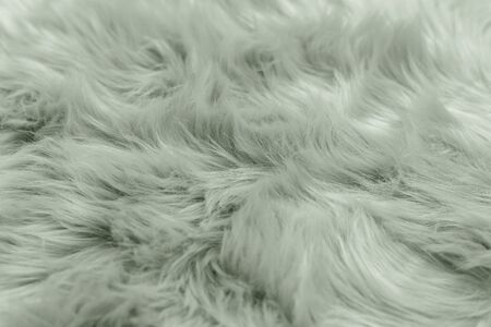 Fur background toned mint green color. Sheepskin background and texture.