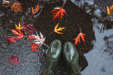Feet in olive green rubber boots standing in a puddle with fallen leaves. Autumn concept.