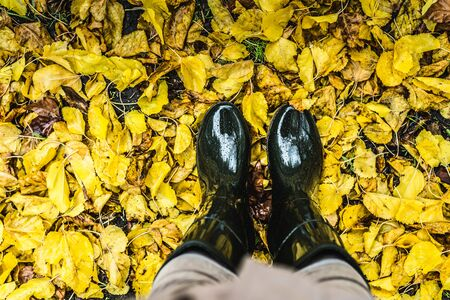 Feet in olive green rubber boots standing in a pile of fallen yellow leaves. Autumn concept. Stock Photo