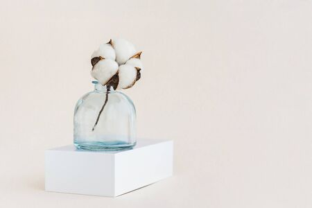 Beautiful white cotton flower in blue vase with copy space. Minimal monochrome creative picture. Holiday cconcept.