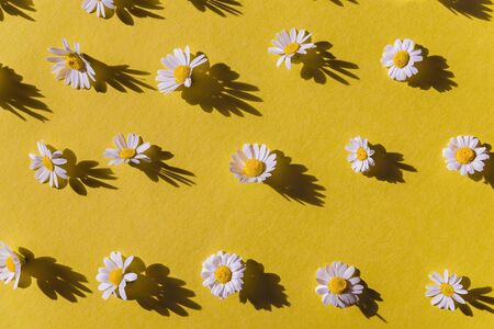 Chamomile creative pattern on yellow background. Top view. Flat lay. Imagens