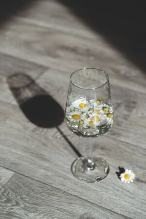 Wineglass with chamomiles flowers and hard shadows. Minimal and creative style.