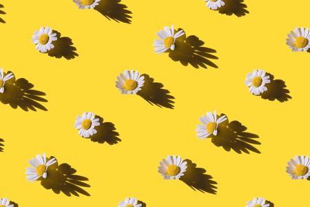 Chamomile creative pattern on yellow background. Top view. Imagens