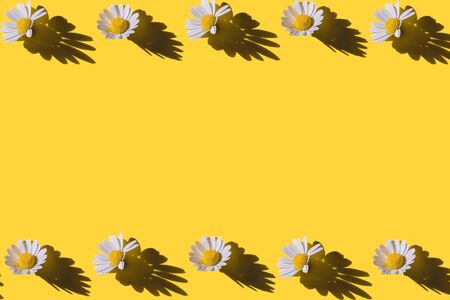 Chamomile creative frame on yellow background. Top view. Flat lay.