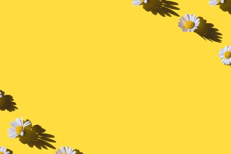 Chamomile creative border on yellow background. Top view. Flat lay. Imagens