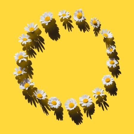 Chamomile creative round frame with hard shadows on yellow background. Top view.