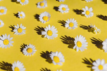 Chamomile creative pattern on yellow background with hard shadows. Top view. Flat lay.