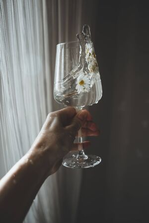 Wineglass with fresh chamomiles flowers and water splashes in hand on dark background. Minimal and creative style.
