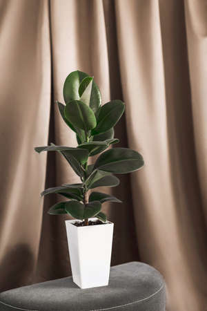 Green flower in white pot in room with brown silk background.
