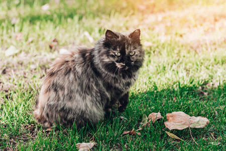 Cute brown cat on green grass in autumn park.