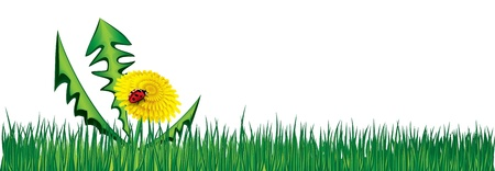 Ladybird on Dandelion in the grass    イラスト・ベクター素材