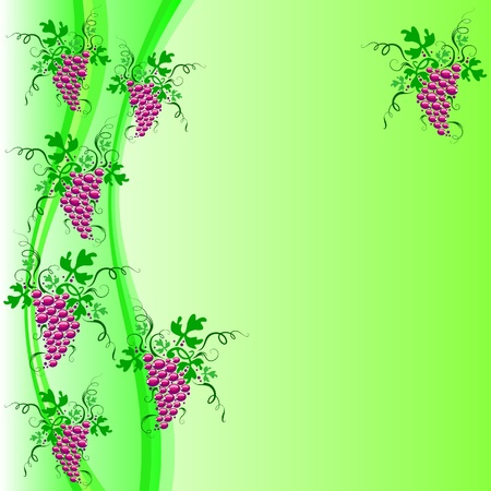 Bunches of red grapes hanging on the vine. Vector