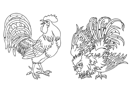 fervent: Fervent and fighting roosters black contour on white background. Illustration