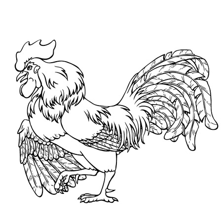 Courting rooster black contour line on white background. Fiery rooster, chicken a symbol of the Chinese new year 2017. Vector illustration. Vintage.