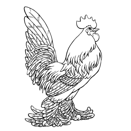 Proud rooster black contour line on white background. Fiery cock, chicken a symbol of the Chinese new year 2017. Vector illustration. Vintage.
