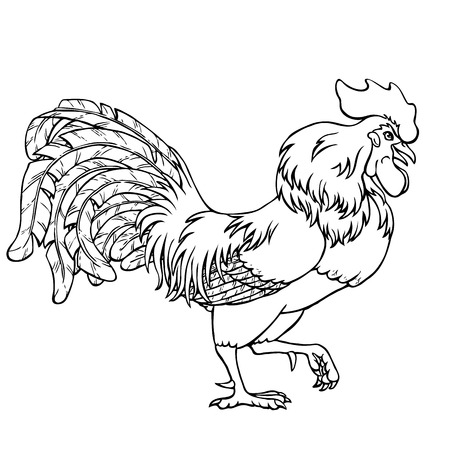 Going rooster black contour line on white background. Fiery cock, chicken a symbol of the Chinese new year 2017. Vector illustration. Vintage.