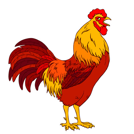 Vector illustration. A crowing orange red rooster on a white background. Fiery chicken a symbol of the Chinese new year 2017 according to east calendar.
