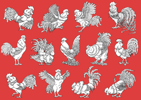 Set roosters coloring on orange background. Decorative chicken monochrome. Coloring page. A symbol of the Chinese new year 2017 according to east calendar.