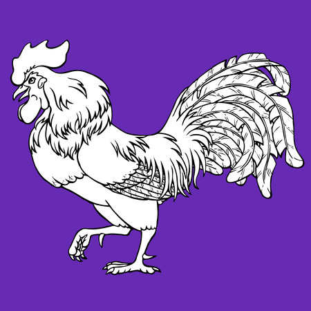 Going rooster coloring on violet background. Decorative chicken monochrome. Coloring page book. A symbol of the Chinese new year 2017 according to east calendar.