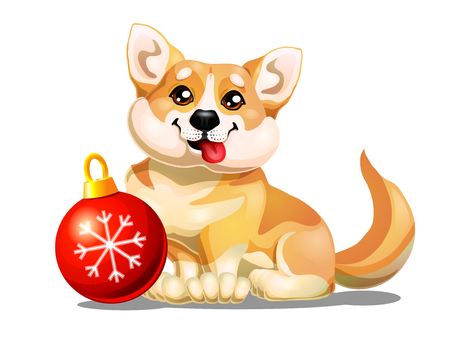 Welsh Corgi and red sphere