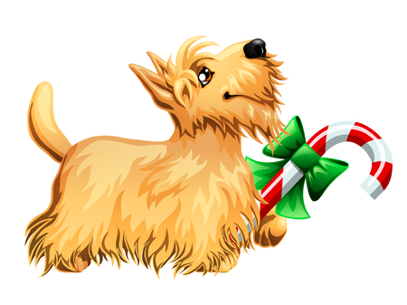 Scottish Terrier and candy cane