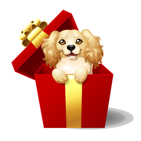 Cocker Spaniel in a gift box Stock Photo