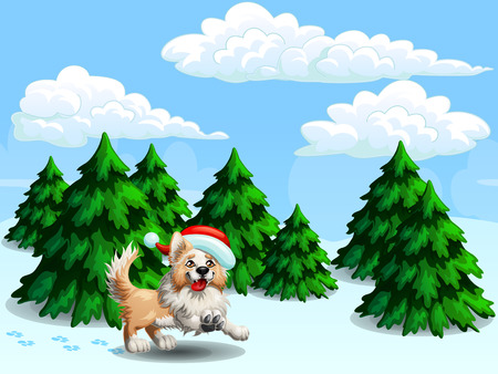 Border Collie and fir-trees gor