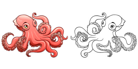 Octopus colorful and contour vector illustration