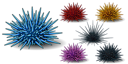 Set of six sea hedgehogs or urchin of blue, red, yellow, pink and black colors. A vector illustration of marine animals separately on a white background with a transparent shadows.